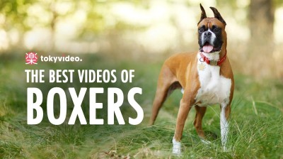 The best videos of Boxers