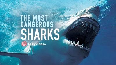 The most dangerous sharks