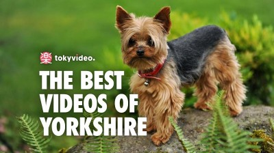 The best videos of Yorkshire